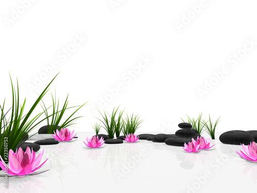 Obraz lilia wodna lilia-wodna-i-kamienie