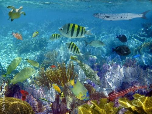 Foto op Plexiglas Panoramafoto s caribbean reef tropical fishes underwater