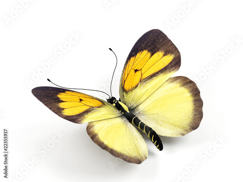 Fotografía  Butterfly - 3d render illustration on white background.