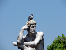 Pigeon Penseur