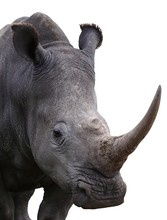 Rhinoceros - Isolated