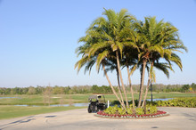Golf Cart And Palm Trees At Fl...