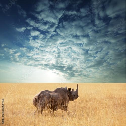 Papiers peints Rhino Rhino