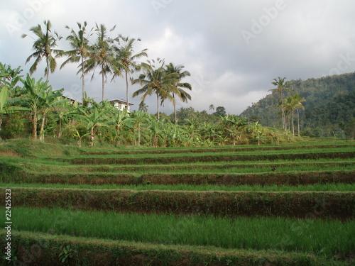 Foto op Aluminium Indonesië indonesie