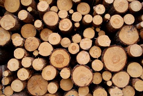 Fotografia  Pine Logs Background