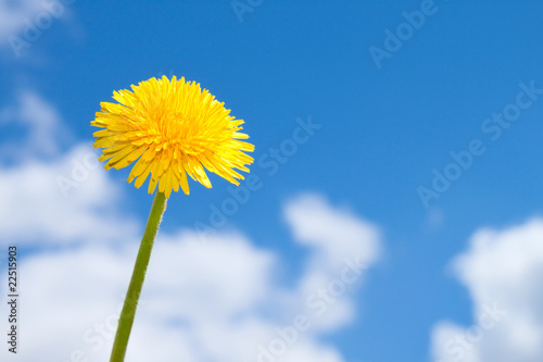 Fotografie, Obraz spring flower on blue sky
