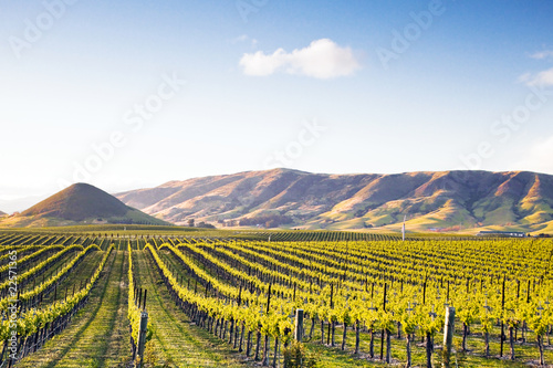 Canvas Prints Vineyard Vineyard at Sunset
