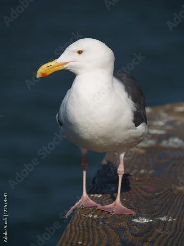Fotografie, Tablou  Seagull on pier