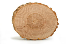 Cross Section Of Tree Trunk Sh...