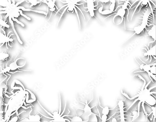 Fotografie, Obraz  Bug frame