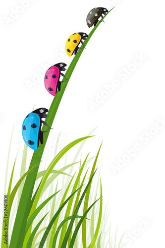 Fotografía  Coccinelles des couleurs de l'imprimerie dans l'herbe