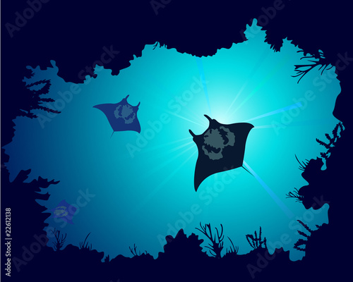 Fotografie, Obraz Background of a coral reef with manta ray