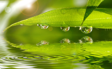 Panel Szklany Bambus Bambus im Sonnenlicht mit Wasserspiegelung und wassertropfen