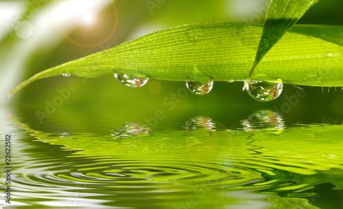 Bambus im Sonnenlicht mit Wasserspiegelung und wassertropfen