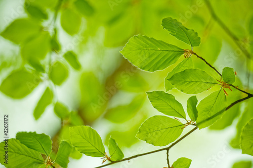 Garden Poster Spring Young leaves