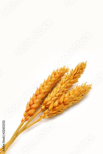Valokuva  spighe di grano