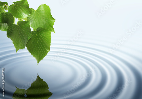 Fotografering  Leaf with soft water ripple and reflection