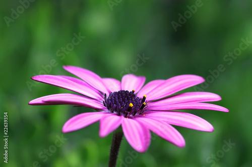 Foto-Lamellen - flor de primavera