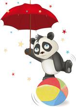 Bear A Panda In Circus