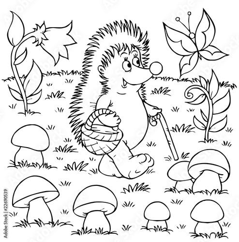 jez-zbierajacy-grzyby