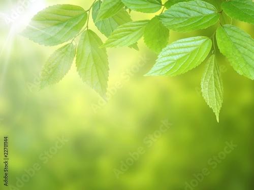 Fototapety, obrazy: 新緑
