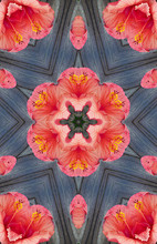 Stock Image Of Abstract Hibisc...
