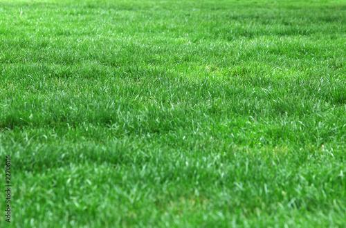 Fotobehang Cultuur Beautiful fresh green lawn