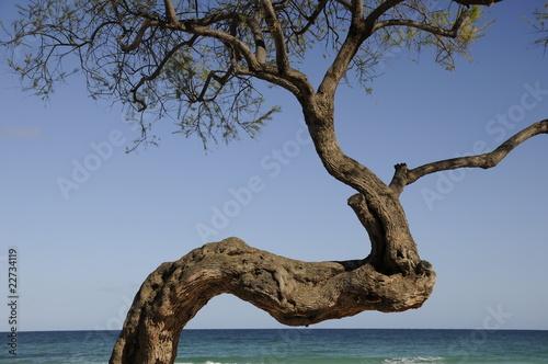 Baum am Meer Canvas Print
