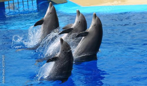Staande foto Dolfijnen Dolphins