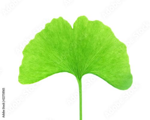 Fotografia, Obraz Isolated Ginkgo Biloba Leaf