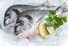 Gilt-head Bream (dorade) On Ice At The Seafood Booth