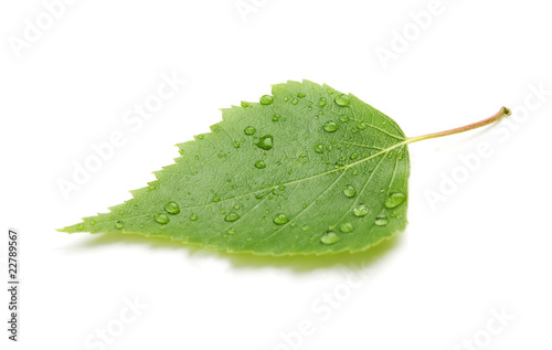 Fototapety, obrazy: Green leaf with water drops