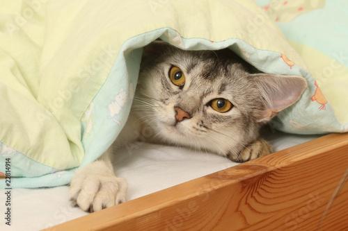 Keuken foto achterwand Kat chat caché sous la couette