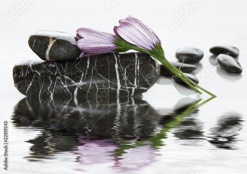 Foto-Duschvorhang - piedras y flor