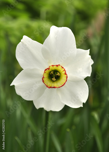 Recess Fitting Narcissus Narcissus Flower