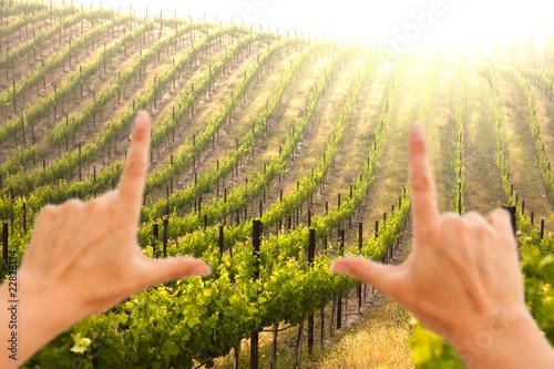 Papiers peints Vignoble Hands Framing Beautiful Lush Grape Vineyard