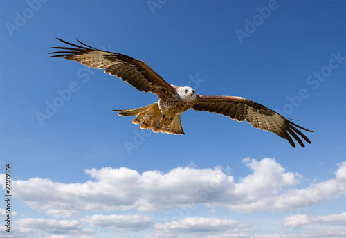 Photo sur Aluminium Aigle Milan