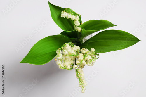 Wall Murals Lily of the Valley
