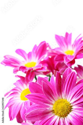 Fototapeta Purple flowers obraz na płótnie