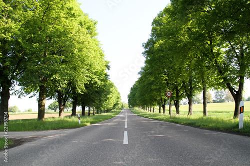 Cuadros en Lienzo Landstraße