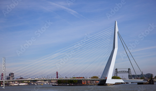 Foto auf AluDibond Schwan erasmus bridge in the centrer of rotterdam