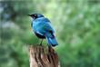 uccello nel parco Ghobe