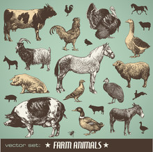 Vector Set: Farm Animals - Var...