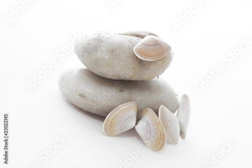 Photo sur Plexiglas Zen pierres a sable Galets & coquillages