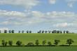 canvas print picture - Baumlandschaft