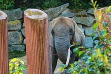 Elefante Prigioniero