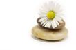 Steine mit Blüte