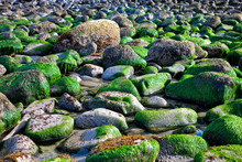 Rocky Ocean Shore After High T...