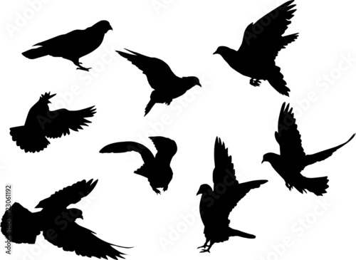 eight dove silhouettes - Buy this stock vector and explore