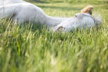A Beautiful White Newborn Foal...